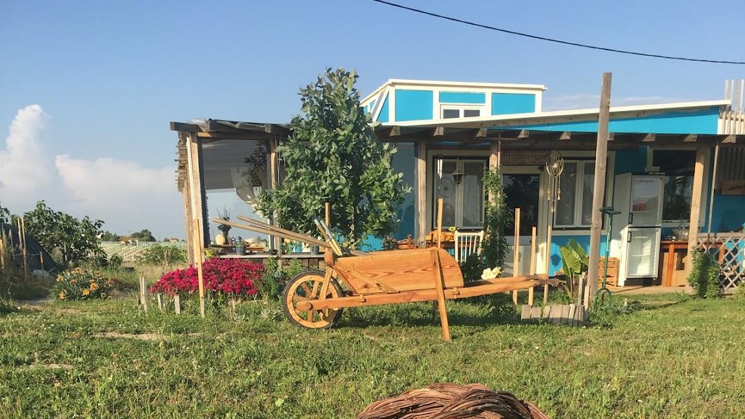 Projeto Romã - Mil Grãos